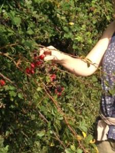Food in the hedgerows